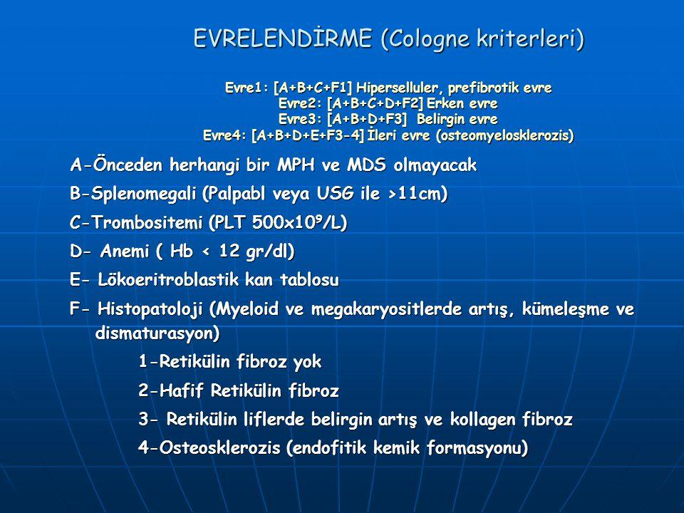EVRELENDİRME (Cologne kriterleri) Evre1: [A+B+C+F1] Hiperselluler, prefibrotik evre Evre2: [A+B+C+D+F2] Erken evre Evre3: [A+B+D+F3] Belirgin evre Evre4: [A+B+D+E+F3-4] İleri evre (osteomyelosklerozis)